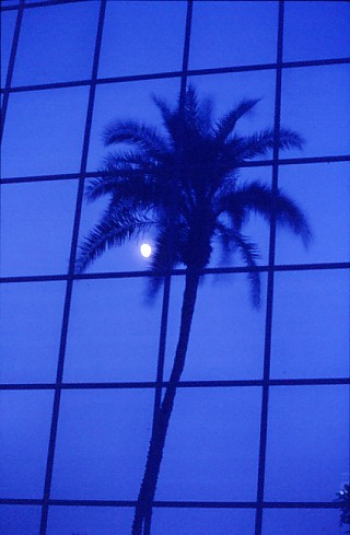 """Blue Palm"""